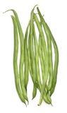 Haricots verts Photographie stock libre de droits