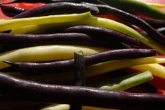 Haricots verts de haricot Images stock