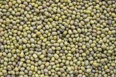 Haricots verts, fèves de mung Photo libre de droits