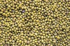 Haricots verts, fèves de mung Photos libres de droits