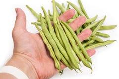 Haricots verts frais en main images libres de droits