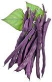 Haricots verts violets d'isolement sur un blanc Images stock