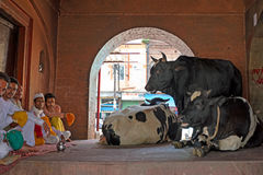 HARIDWAR, INDIA - 24 APRILE 2017: Mercato locale dalle mucche in Haridwar India Immagine Stock Libera da Diritti