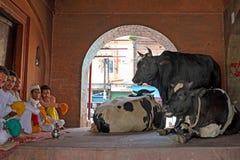 HARIDWAR, LA INDIA - 24 DE ABRIL DE 2017: Mercado local de vacas en Haridwar la India Imagen de archivo libre de regalías