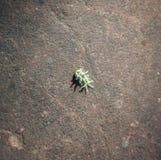 Harig Caterpillar of Algemeen Caterpillar stock foto's