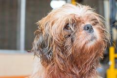 Harige hond royalty-vrije stock afbeeldingen