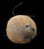 harige kokosnoot met zwarte geïsoleerde achtergrond Stock Foto's