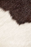 Harige textuur van koe Stock Afbeelding