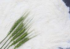 Harina blanca y espigas de trigo verdes llenas con brea de los granos Imagen de archivo