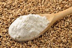 Harina y granos de trigo Fotografía de archivo libre de regalías