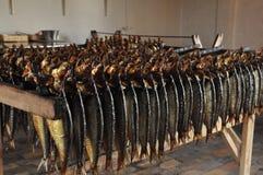 Haringen Royalty-vrije Stock Foto's