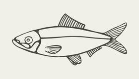 haringen Marine Food Fish Tekening Stock Foto's