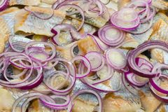 Haringensalade met rode uien royalty-vrije stock fotografie