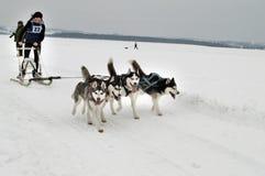 Harkìv - gennaio 14: Corse dei cani della slitta Lo sportivo esegue la slitta trainata dai cani sulla s Fotografie Stock Libere da Diritti