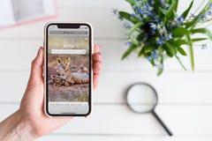 HARK?V, UCRAINA - 10 aprile 2019: La donna tiene il iPhone X di Apple con Bing sito di COM sullo schermo Pagina di ricerca fotografie stock