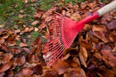 Harken der Blätter. entfernen Sie Blätter. Gartenarbeit in Stockfotografie