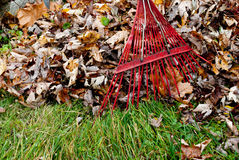 Harken der Blätter Stockfotografie