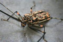 harlequin жука Стоковое Изображение RF