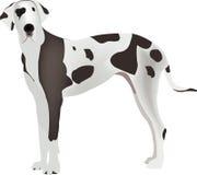 Harlequin Great Dane Royalty Free Stock Image