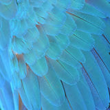 Harlequin Macaw feathers Stock Photography