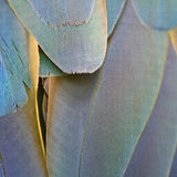 Harlequin Macaw feathers Stock Images