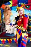 harlequin poodle εκμετάλλευσης στοκ φωτογραφία με δικαίωμα ελεύθερης χρήσης