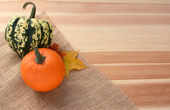 Harlequin and small orange pumpkin with maple leaves Royalty Free Stock Images