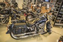 2008 Harley-Davidson, lyx- Softail Arkivbild