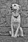 Harley der Hund Stockbild