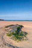 Harlyn bay Cornwall england uk. Stock Image