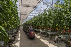 Greenhouse Worker driving long Trolley Stock Photo