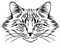 Harmful cat muzzle Stock Photo