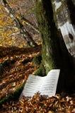 Harmonia do outono, ritmo da natureza Imagem de Stock Royalty Free