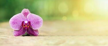 Harmonia kwiatu sztandar Zdjęcie Royalty Free