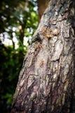 Harmonia mrówki Zdjęcia Royalty Free