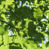 Harmonic pattern of green leaves in detail. As harmonic background royalty free stock photos
