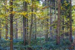 Harmonic pattern of oak trees Royalty Free Stock Photos