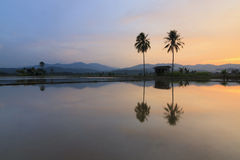 Harmonic reflection of sunset at Sabah, Borneo, Malaysia Stock Images