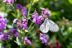 Harmonie de fleur photo stock