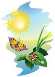 Harmonie in zonnige dag Stock Fotografie
