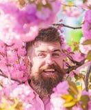 Harmonii pojęcie Brodaty mężczyzna z eleganckim ostrzyżeniem z kwiatami Sakura na tle Mężczyzna z brodą dalej i wąsy obraz royalty free
