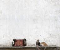 Harmonika en gestreepte katkat stock foto's