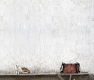Harmonika en witte kat royalty-vrije stock fotografie