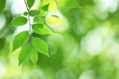 Harmonious forest detail Stock Photos