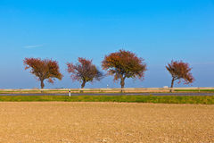 Harmonische groep bomen stock foto's