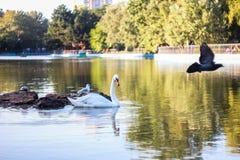 Harmonische wild lebende Tiere auf dem See Lizenzfreies Stockbild