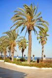 Harmonous palm trees. Park round harmonous palm trees the road and flowers Royalty Free Stock Image