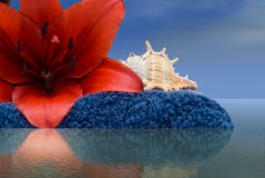 Harmony. Close-up view of a red tiger lily and a seashel sitting on a bath towel surrounded by water Stock Image