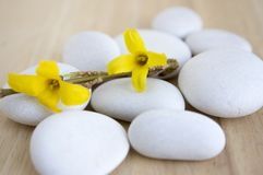 Group of white pebbles, yellow branch with spring blossoms royalty free stock photos