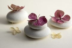 Harmony and balance, cairns, dry hydrangea white and red flowers. Harmony and balance, cairns, simple poise stones on white background, rock zen sculpture, five Royalty Free Stock Photo